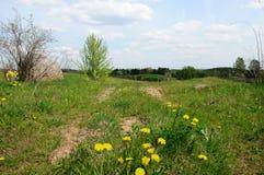 Дорога поля растет с травой и одуванчиками Стоковая Фотография RF