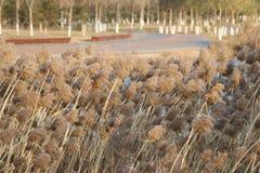 Дорога преграженная тростниками Стоковое фото RF