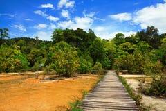 дорога природы к Стоковые Фото
