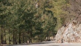 Дорога пропуская через сосновый лес сток-видео