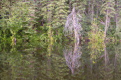 Дорога пруда бобра, потерянная реки, Woodstock NH 03262 Стоковое фото RF