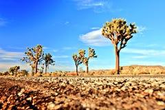 Дорога пустыни с деревьями Иешуа в национальном парке дерева Иешуа, США Стоковые Изображения RF