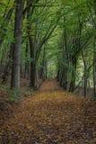 Дорога пущи в осени Стоковые Фото