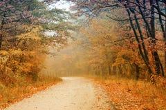 дорога пущи осени Стоковые Фото