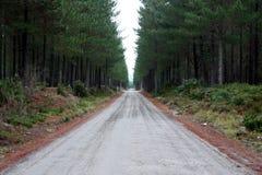 дорога пущи Стоковое Изображение RF