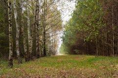 дорога пущи Стоковые Фотографии RF