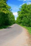 дорога пущи Стоковая Фотография