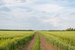 Дорога, пшеничное поле и облака ландшафта лета Стоковое Изображение