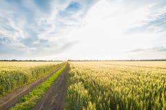 Дорога, пшеничное поле и облака ландшафта лета Стоковые Изображения