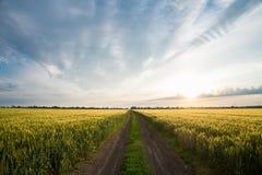 Дорога, пшеничное поле и облака ландшафта лета Стоковая Фотография RF