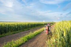 Дорога, пшеничное поле и облака ландшафта лета Стоковая Фотография