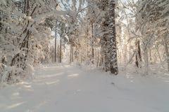 Дорога древесины зимы Стоковые Фото