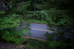 Дорога режет до конца толстый лес Орегона Стоковые Фото