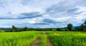 Дорога режет до конца сочные зеленые поля Стоковое Изображение RF
