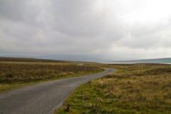 Дорога резервуара коровы зеленая Стоковое фото RF