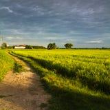 дорога риса поля Стоковая Фотография RF