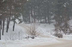 Дорога рядом с плотными лесами покрытыми с снегом Стоковые Изображения RF