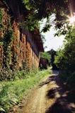 дорога сельская Стоковые Изображения