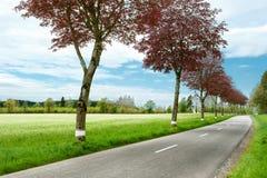 дорога сельской местности Стоковое Изображение RF