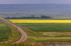 дорога сельскохозяйственнй угодье страны Стоковое фото RF