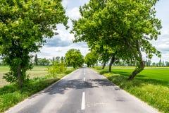 Дорога сельской местности между деревьями Стоковое Изображение RF
