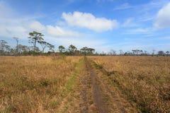 Дорога сельской местности на идилличном луге Стоковые Изображения
