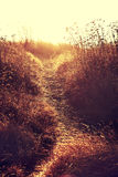 Дорога сельской местности осени через поля с пшеницей Стоковое Фото