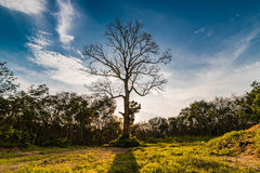Дорога сельской местности Таиланда Стоковая Фотография RF