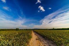 Дорога сельской местности Таиланда Стоковое Изображение
