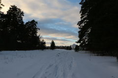Дорога снега в лесе зимы Стоковые Фото