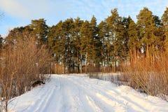 Дорога снега в лесе зимы Стоковое Изображение RF
