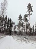 Дорога снега льда Финляндии ели сосны хвои хвойного дерева взгляда ландшафта pinetree леса снега зимы северная Стоковые Изображения
