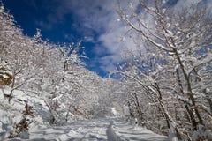 дорога снежная Стоковые Изображения