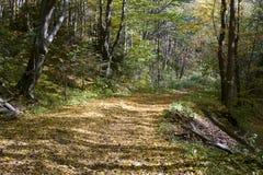 дорога солнечная Стоковое Фото