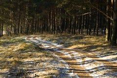 дорога сосенки солнечная к древесине Стоковое Изображение