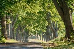 Дорога среди деревьев стоковое изображение