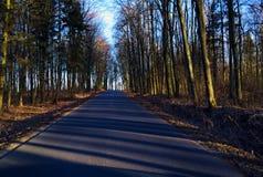 Дорога среди деревьев стоковые изображения