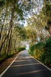 Дорога среди леса Стоковое фото RF