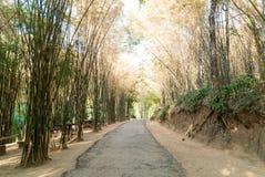 Дорога с бамбуковым лесом Стоковая Фотография