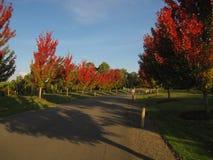 Дорога с винодельней деревьев осени окружающей австралийской Стоковая Фотография RF