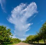 Дорога с деревьями на обеих сторонах стоковое изображение rf