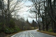 Дорога с деревьями стоковое фото rf
