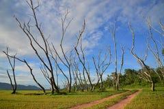 Дорога с зеленой травой Стоковое фото RF