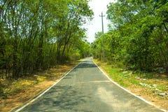 Дорога с предпосылкой растительности Стоковые Фотографии RF