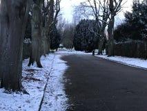 Дорога с снегом и деревья на боковой линии Стоковые Фото