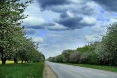 Дорога с яблонями в природе Латвии стоковое изображение rf