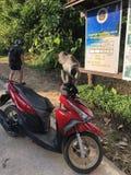 Дорога Таиланда Стоковая Фотография RF