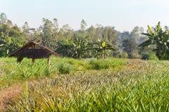 Дорога Таиланда джунглей укрытия Стоковые Изображения RF