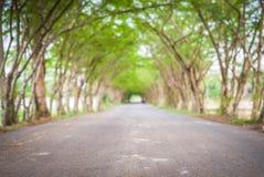 Дорога тоннеля дерева Стоковая Фотография