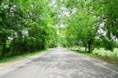 Дорога тоннеля дерева Стоковые Фото